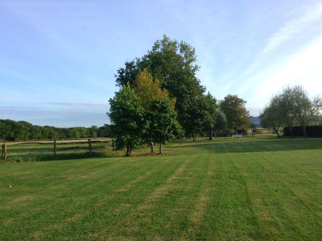 lawn-in-sunshine